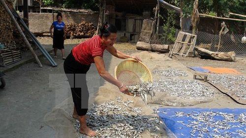 Cuộc sống của người dân tái định cư thủy điện Sơn La ở xã Mường Giàng, huyện Quỳnh Nhai, tỉnh Sơn La (Ảnh: Công Luật/TTXVN)