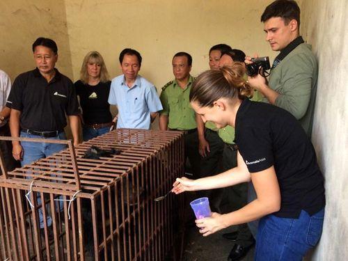 Quảng Ninh chính thức chấm dứt tình trạng nuôi nhốt gấu lấy mật