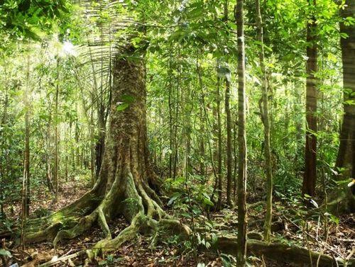 OECD: Brazil là nước có tốc độ phá rừng cao nhất thế giới