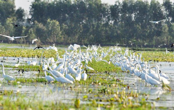 Láng Sen được công nhận là khu Ramsar thứ 7 của Việt Nam