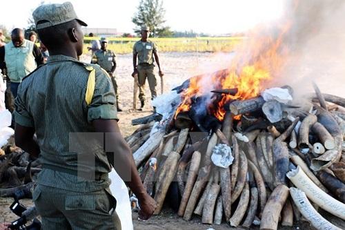 Tanzania bắt 4 người Trung Quốc tàng trữ 11 cặp sừng tê giác