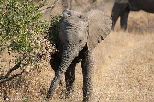 Hạ Viện Mỹ thông qua Đạo luật chống săn bắt động vật hoang dã toàn cầu