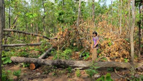 Kiểm điểm, làm rõ trách nhiệm đối với các đơn vị để mất rừng