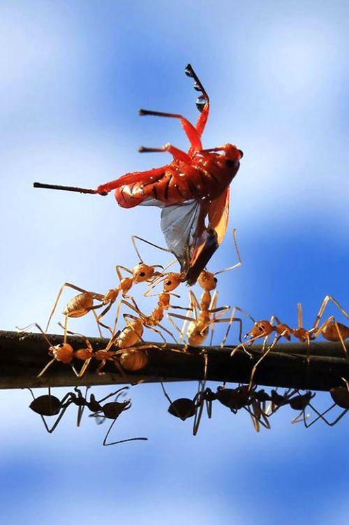 """Tác phẩm """"Đoàn kết"""" của tác giả Hans Tangmanpoowadol (Thái Lan) trong Cuộc thi ảnh ASEAN về đa dạng sinh học"""