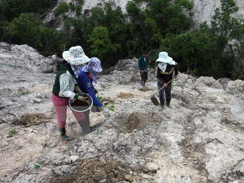 Bảo vệ rừng – giải pháp ứng phó hiệu quả với biến đổi khí hậu