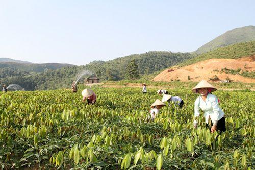 Nhiều hécta rừng đã bị đốn hạ để trồng cao su