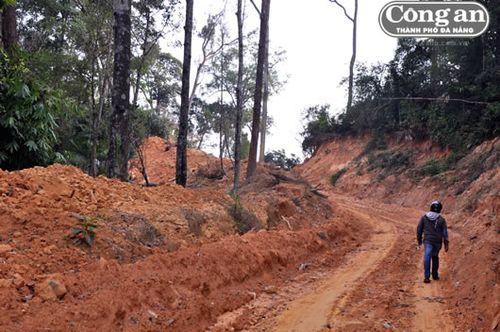 Cty Phước Hưng mở đường trái phép lên khe 39, thôn 5, Phước Hòa qua rừng tự nhiên phòng hộ.