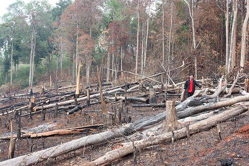 Mất rừng tràn lan vì giao cho doanh nghiệp