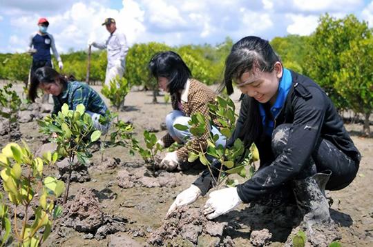 Không đạt được kế hoạch về độ che phủ rừng trên toàn quốc