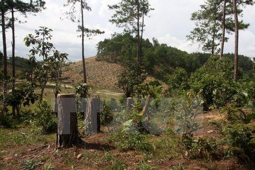 Rừng phòng hộ đầu nguồn Đại Ninh, Lâm Đồng, bị tàn phá nghiêm trọng (Ảnh: Đặng Tuấn/TTXVN)