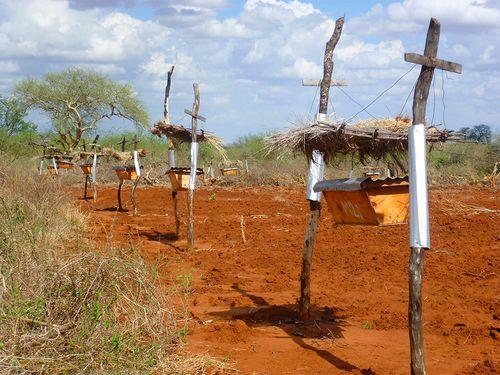 Hàng rào tổ ong ngăn voi phá hoại mùa màng