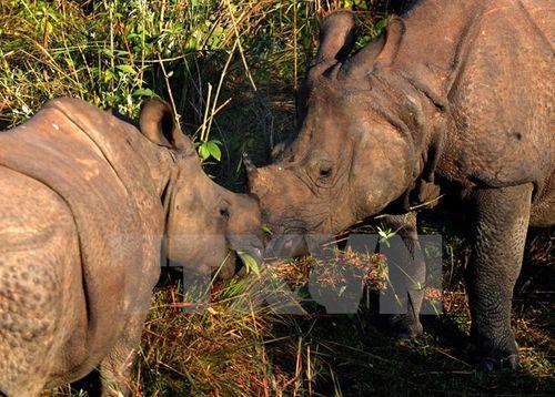 Nam Phi triển khai mặt trận chung chống nạn săn bắt trộm tê giác