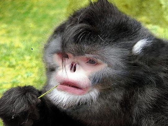 Khỉ không mũi