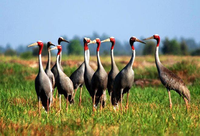 Kiên Giang thành lập Khu bảo tồn loài – sinh cảnh Phú Mỹ 2.700ha