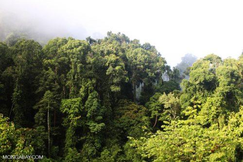 Rừng nhiệt đới ở Sabah, Malaysia (Ảnh: Rhett A. Butler)