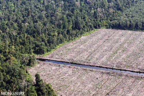 Rừng bị phá để làm đồn điền ở tỉnh Riau (Ảnh: Rhett A. Butler)