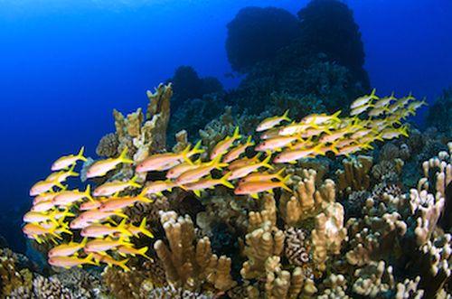 Top 10 sự kiện đại dương năm 2015
