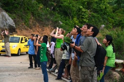 Du khách say sưa ngắm nhìn chà vá chân nâu trên núi Sơn Trà