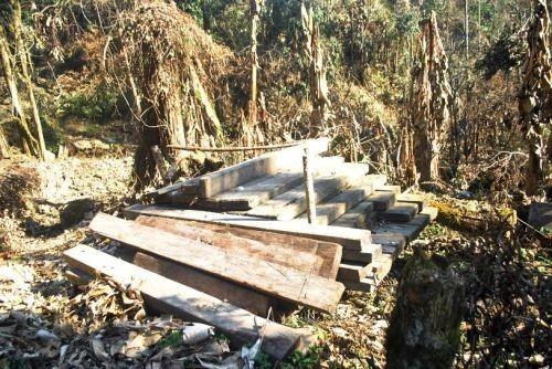 Một số lượng gỗ Sa Mu đang được tập kết cạnh con đường dẫn lên núi Phù Xai Lai Leng, thuộc bản Buộc Mủ, xã Na Ngoi, huyện Kỳ Sơn (Nghệ An).