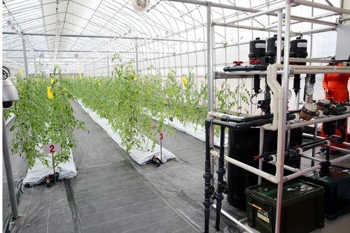 Hệ thống nhà máy trồng rau theo công nghệ AKISAI có khả năng tự điều chỉnh độ ẩm, nhiệt độ, ánh sáng theo tiêu chuẩn của cây trồng (Ảnh: VGP/Thành Chung)