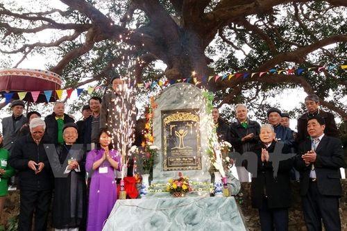 Việc được vinh danh là Cây Di sản sẽ góp phần nâng cao nhận thức của người dân trong việc bảo vệ thiên nhiên, môi trường nơi mình sinh sống. (Ảnh: Hồng Thơ/Vietnam+)