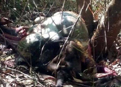 Bò tót quý hiếm bị bắn chết tại khu bảo tồn thiên nhiên
