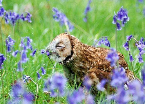 Một chú cú vọ mê mẩn trước những bông hoa. (ảnh: Sam Hardwick/Bright Side)