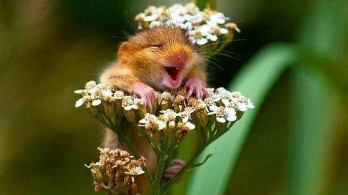 Ôi tôi đang hạnh phúc! (ảnh: Andrea Zampatti/Bright Side)