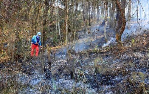 Hơn 8ha rừng ở Khu bảo tồn thiên nhiên Hoàng Liên bị thiêu rụi