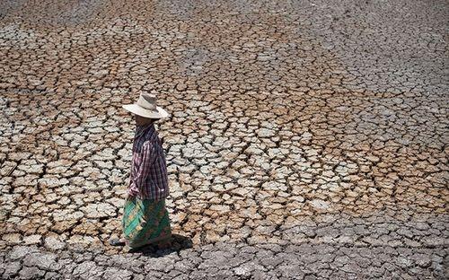 Hạn hán tại Thái Lan (Nguồn: AFP)