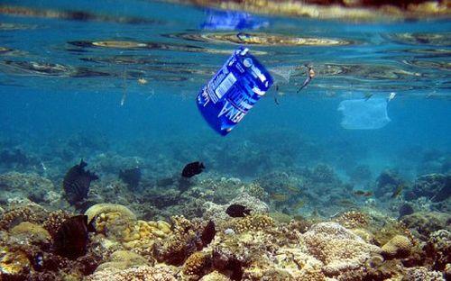 Tìm ra vi khuẩn phân hủy vật liệu nhựa