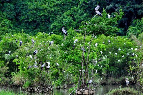 Khu du lịch sinh thái vườn chim Thung Nham, xã Ninh Hải, huyện Hoa Lư, Ninh Bình. (Ảnh: trangandanhthang.vn)