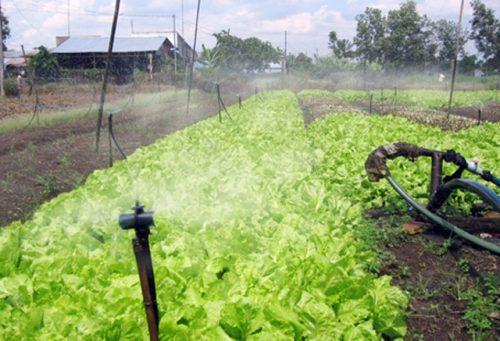 Công nghệ tưới tiêu tiết kiệm nước (Ảnh: Nhân Dân)