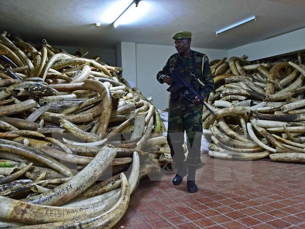 Kenya thu giữ số lượng lớn sản phẩm động vật hoang dã quý hiếm