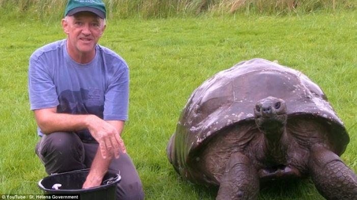 Con rùa già nhất thế giới lần đầu được tắm rửa sau 184 năm