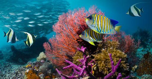 Ecuador kêu gọi mở rộng Hành lang biển Thái Bình Dương