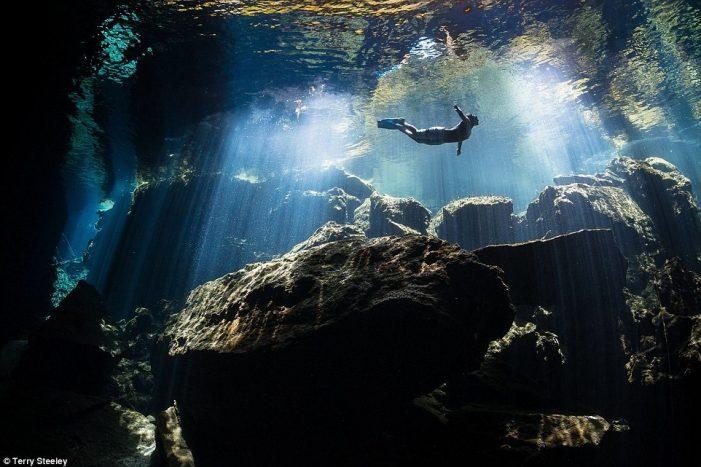 Những bức ảnh lột tả sự sống và vẻ đẹp dưới đáy biển sâu