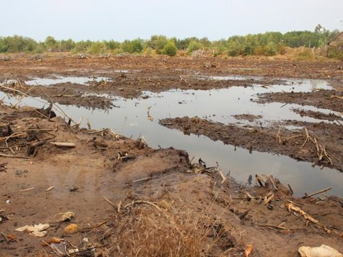 Hai vùng trũng Đồng Tháp Mười và Tứ giác Long nay đã bị cạn kiệt nước (Ảnh: Hùng Võ/Vietnam+)