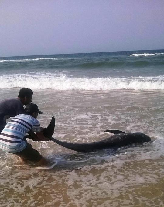 Người dân đưa con cá voi bị chết vào bộ để chọn