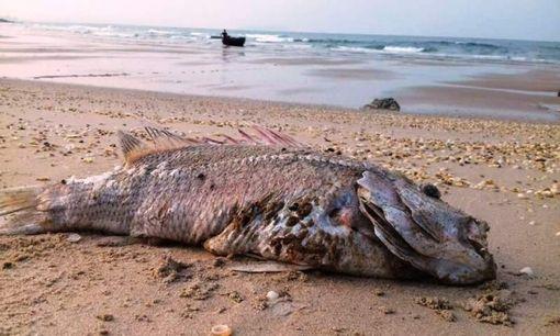 Giải quyết hậu quả ô nhiễm trên biển: Nhà nước không nên làm mọi việc