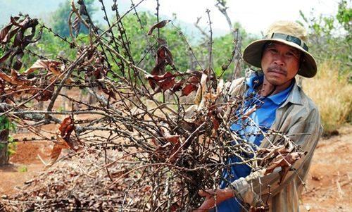 Tình trạng khô hạn ở Kon Tum đang ngày càng nghiêm trọng.