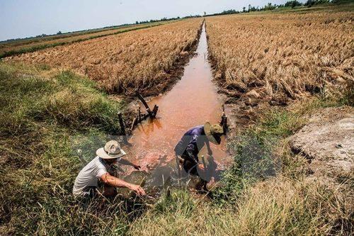 Những con kênh phục vụ tưới tiêu cho đồng ruộng bị nhiễm mặn trầm trọng (Ảnh: Trọng Đạt/TTXVN)