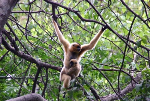 Những loài thú quý hiếm ở vườn quốc gia Bidoup-Núi Bà.