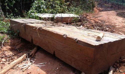 Nhiều hộp gỗ lớn nằm dọc con đường mòn dẫn lên rừng