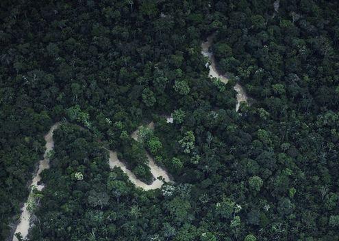Một góc rừng Amazon nhìn từ trên cao. (Nguồn: Reuters)