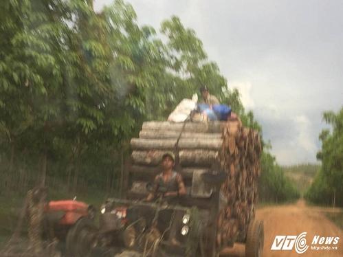 Đoàn xe 'hút máu rừng' rầm rầm chạy ra đường Hồ Chí Minh (Ảnh: Yumi)