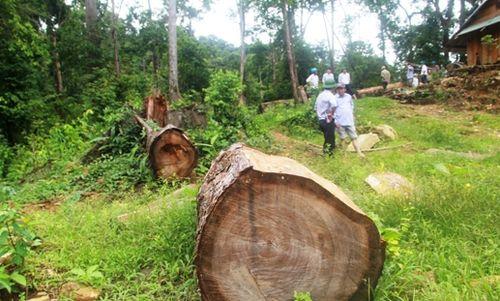 Thủ đoạn tinh vi hơn khi rừng đóng cửa