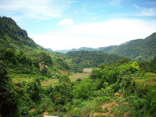 Lực lượng bảo vệ rừng chuyên trách do chủ rừng thành lập