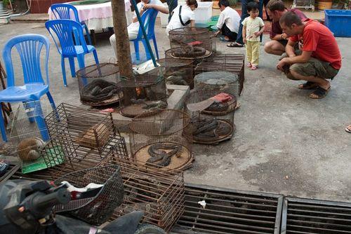 Khách du lịch có thể ghé thăm rất nhiều thị trường buôn lậu động vật hoang dã, như hình ảnh trên đây tại Myanmar. (Ảnh: Dan Bennett)