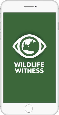 Ứng dụng Wildlife Witness có thể sử dụng trong cả hệ điều hành Android và IOS. (Ảnh: Taronga Zoo)